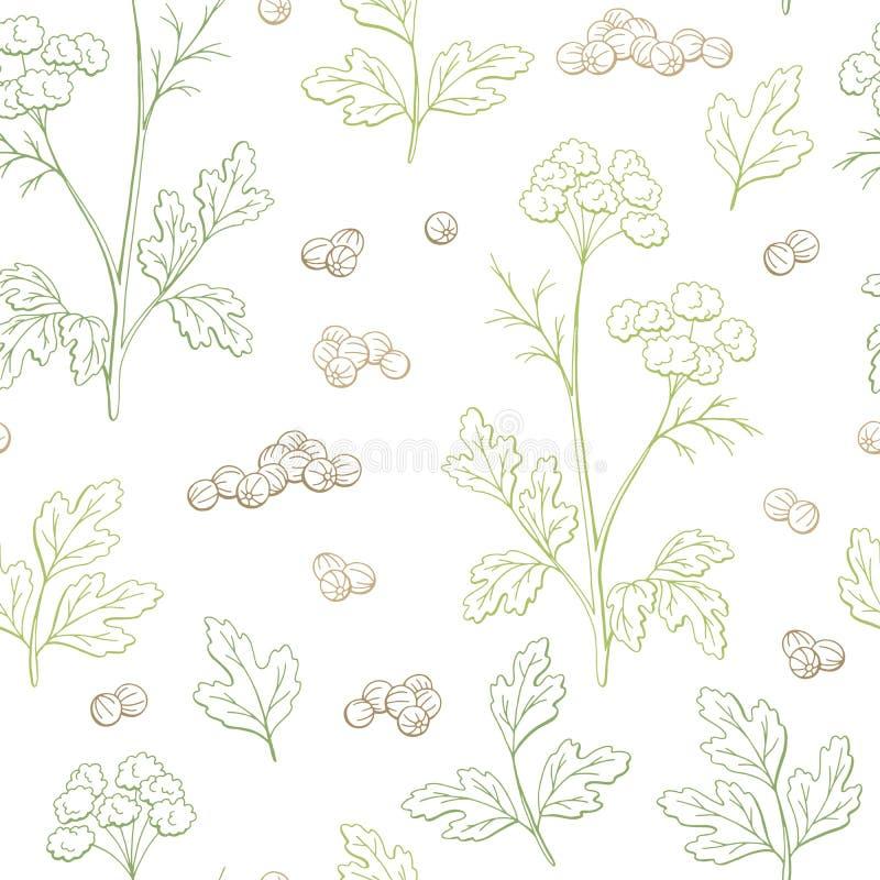 Vecteur sans couture d'illustration de croquis de fond de modèle de couleur graphique d'usine de cilantro de coriandre illustration stock
