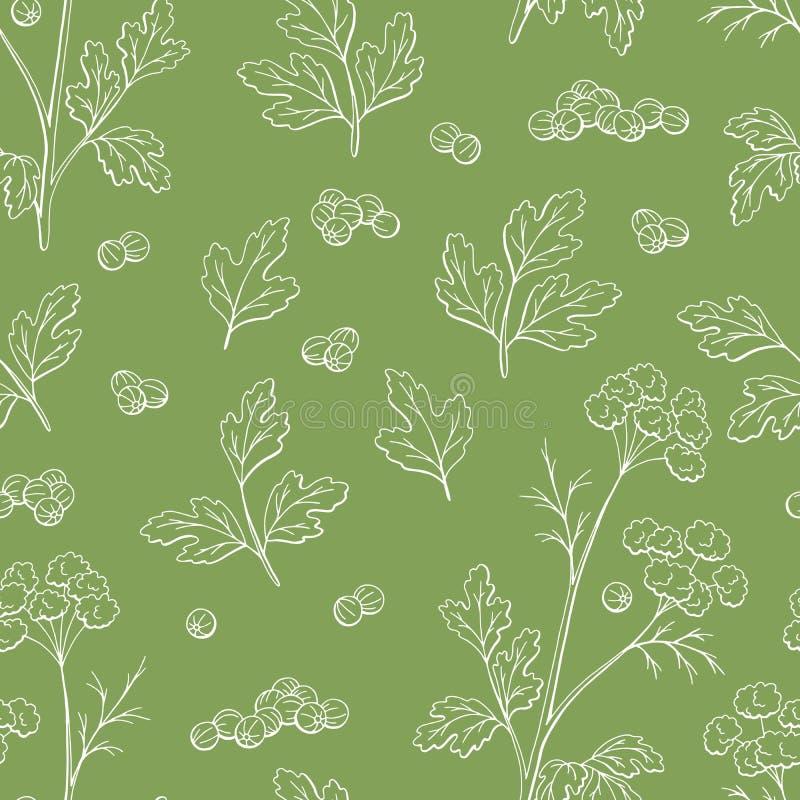 Vecteur sans couture d'illustration de croquis de fond de modèle de couleur graphique d'usine de cilantro de coriandre illustration libre de droits
