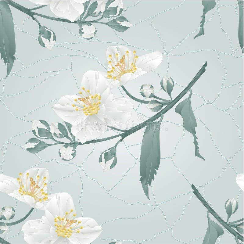 Vecteur sans couture de vintage de fissures de fleur et de bourgeons de jasmin de texture illustration stock