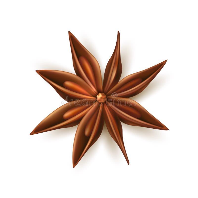 Vecteur sec réaliste d'étoile d'anis avec des puits illustration libre de droits