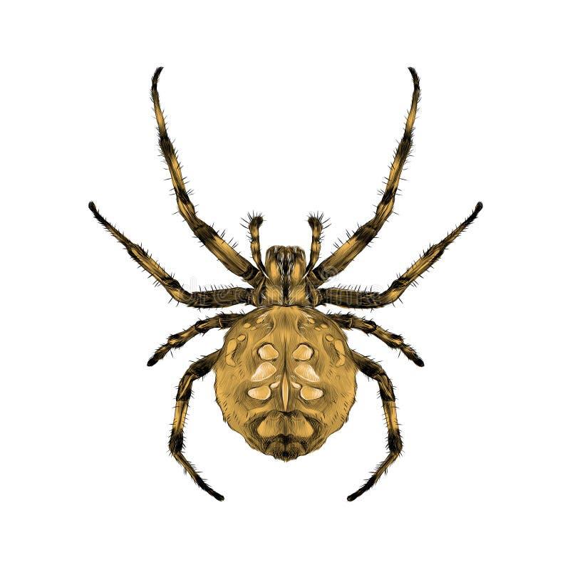 Vecteur symétrique de croquis de vue supérieure d'araignée illustration de vecteur