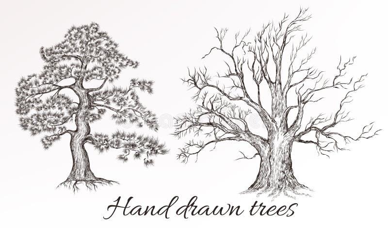 Vector árvores detalhadas altas tiradas mão para o projeto ilustração royalty free