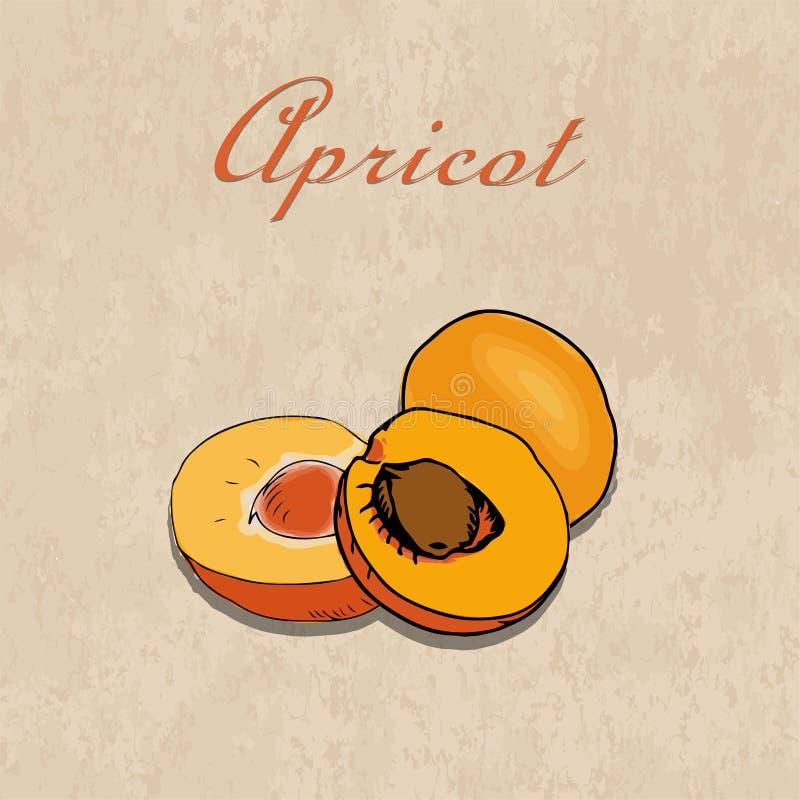 Vector абрикосы нарисованные рукой на предпосылке бумаги ремесла иллюстрация штока