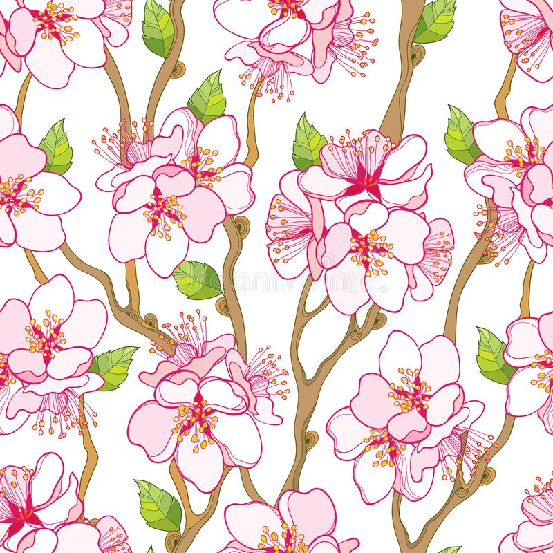 Vector безшовная картина с пуком цветка абрикоса плана зацветая, ветвью и листьями зеленого цвета на белой предпосылке иллюстрация вектора