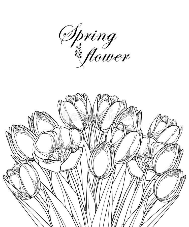 Vector букет при цветки тюльпана плана, бутон и богато украшенные листья в черноте изолированные на белой предпосылке Пук тюльпан иллюстрация штока