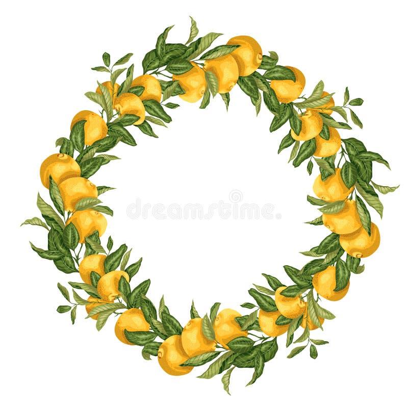 Vector венок шаблона иллюстрации с branc дерева цитрусовых фруктов иллюстрация штока