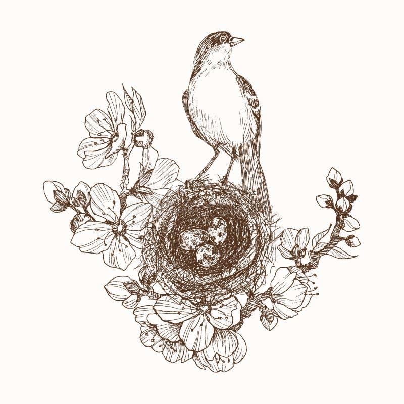 Vector иллюстрация гнезда нарисованного рукой с запятнанными яичками и птицей на зацветая завтрак-обеде Графический стиль, красив иллюстрация штока