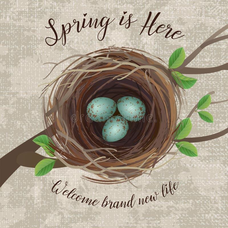 Vector иллюстрация гнезда ` s птицы с голубыми запятнанными яичками бесплатная иллюстрация