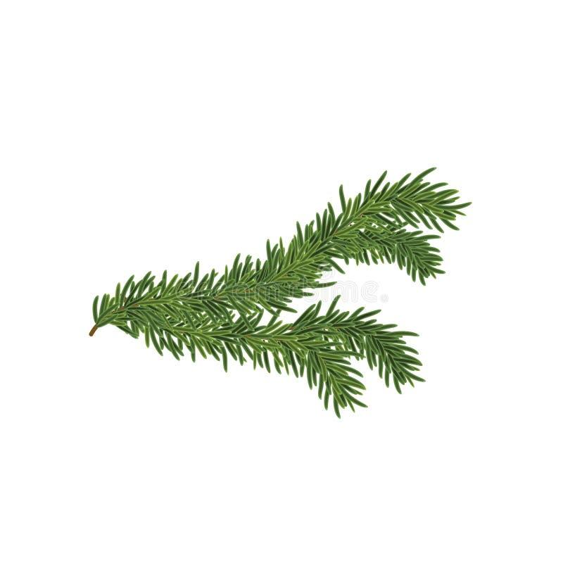 Vector иллюстрация елевой ветви изолированной на белизне стоковое изображение