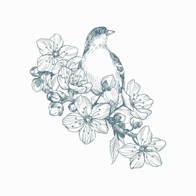 Vector иллюстрация птицы нарисованной рукой на зацветая завтрак-обеде Графический стиль, красивая иллюстрация Гравировать ретро с бесплатная иллюстрация