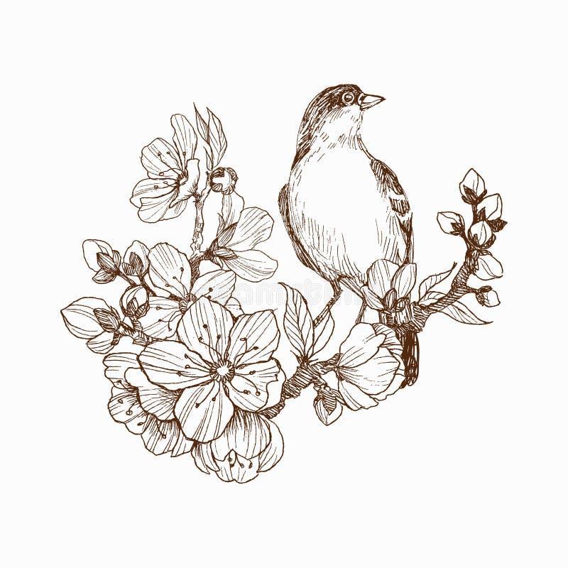 Vector иллюстрация птицы нарисованной рукой на зацветая завтрак-обеде Графический стиль, красивая иллюстрация Гравировать ретро с иллюстрация вектора