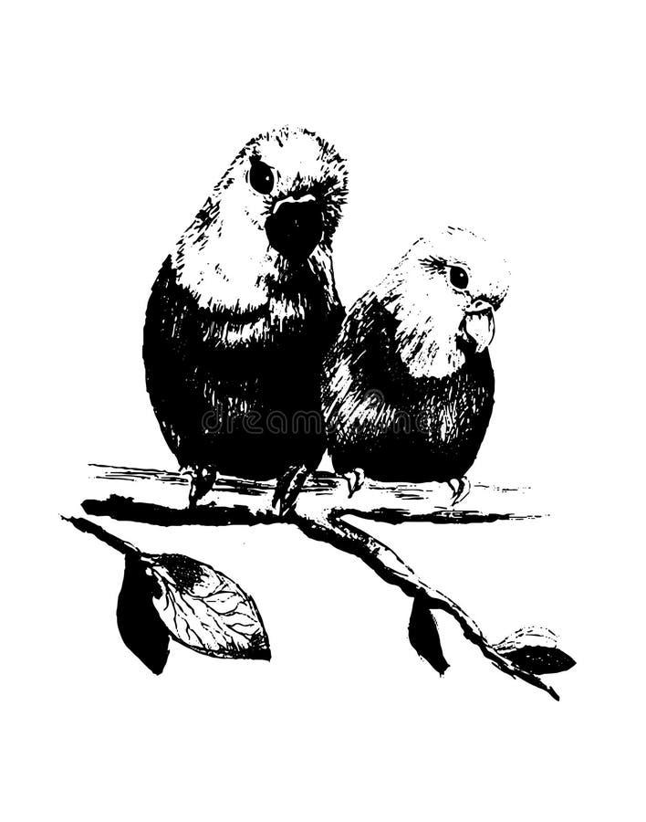 Vector иллюстрация 2 птиц, попугаев в eps бесплатная иллюстрация