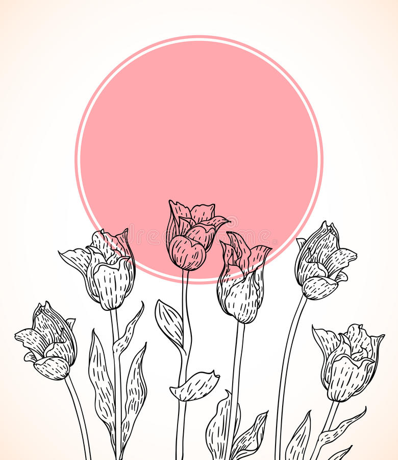Vector карточка с тюльпанами нарисованными рукой на розовом круге. бесплатная иллюстрация