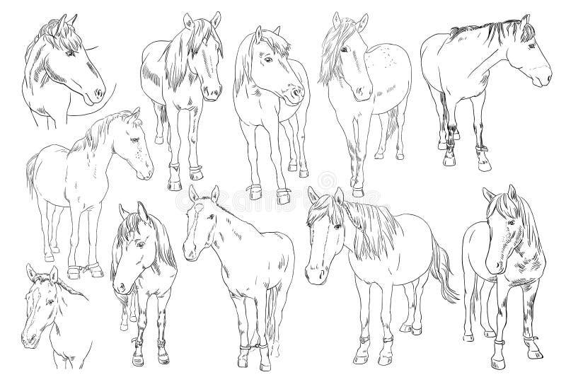Vector комплект изображения лошади на белой предпосылке Конспектируйте иллюстрацию эскиза красивой линии портрета одного лошадей иллюстрация вектора