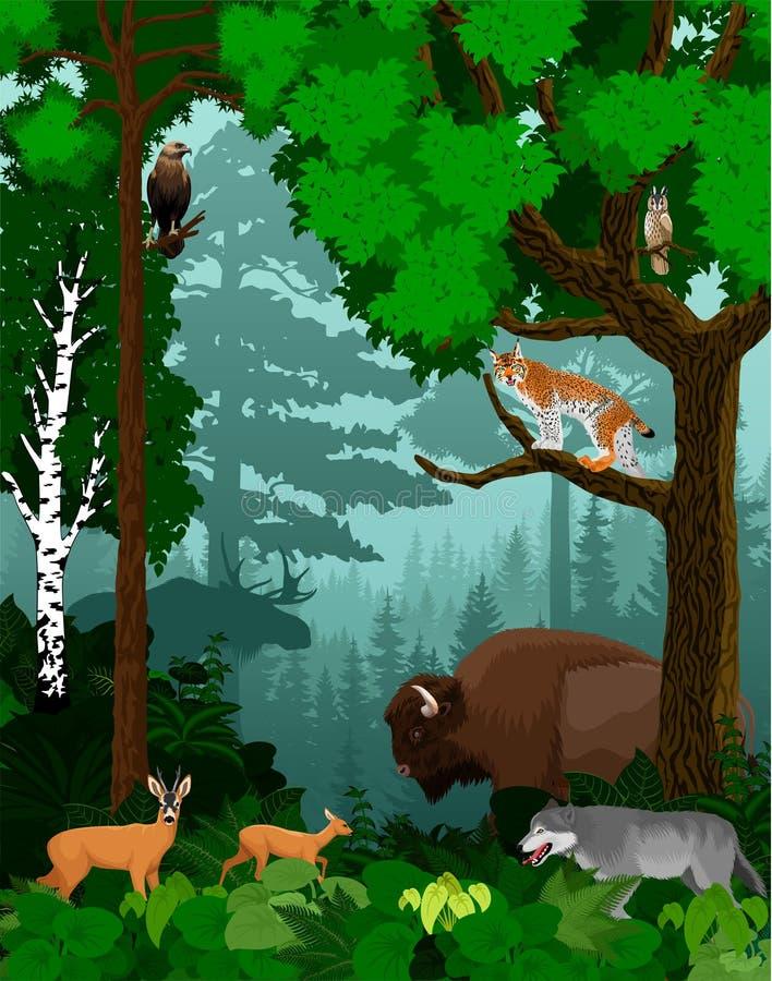 Vector лесные деревья полесья зеленые подсвеченные с бизоном, волком, рысем, сычом, лосями и оленями иллюстрация вектора