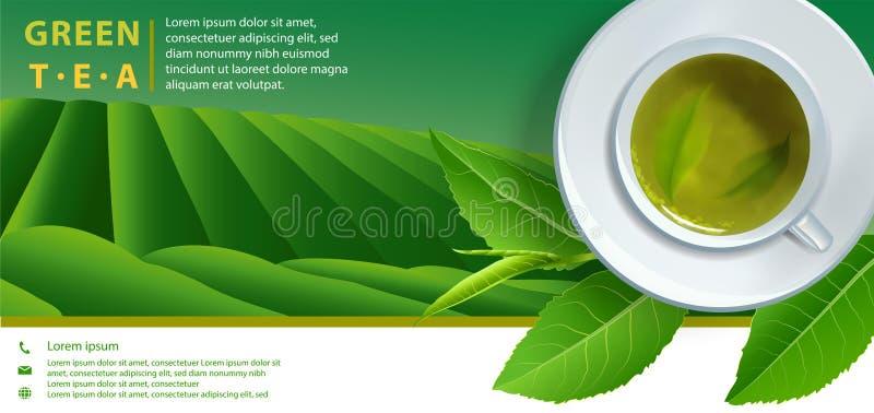 Vector листья и падения чая горизонтального знамени зеленого чая голубые дальше иллюстрация штока