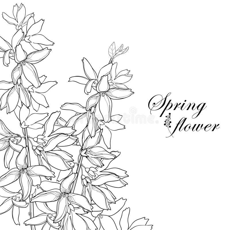 Vector пук с цветком Forsythia плана, разветвите, листья в черноте изолированные на белой предпосылке Угловой состав Forsythia иллюстрация вектора