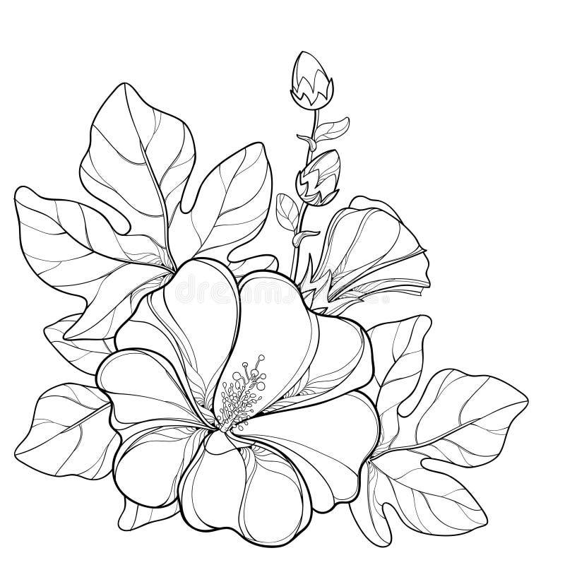 Vector пук с rosea Alcea плана или цветком Hollyhock бесплатная иллюстрация