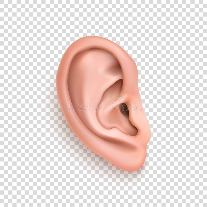 картинки уши на прозрачном фоне раньше
