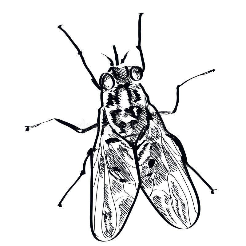 Vector рука насекомого мухы нарисованная на предпосылке иллюстрация штока