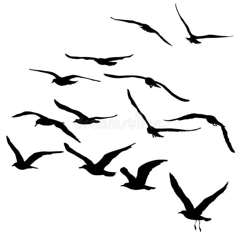 Vector силуэты чайок летания, изолированного черного плана стоковые изображения