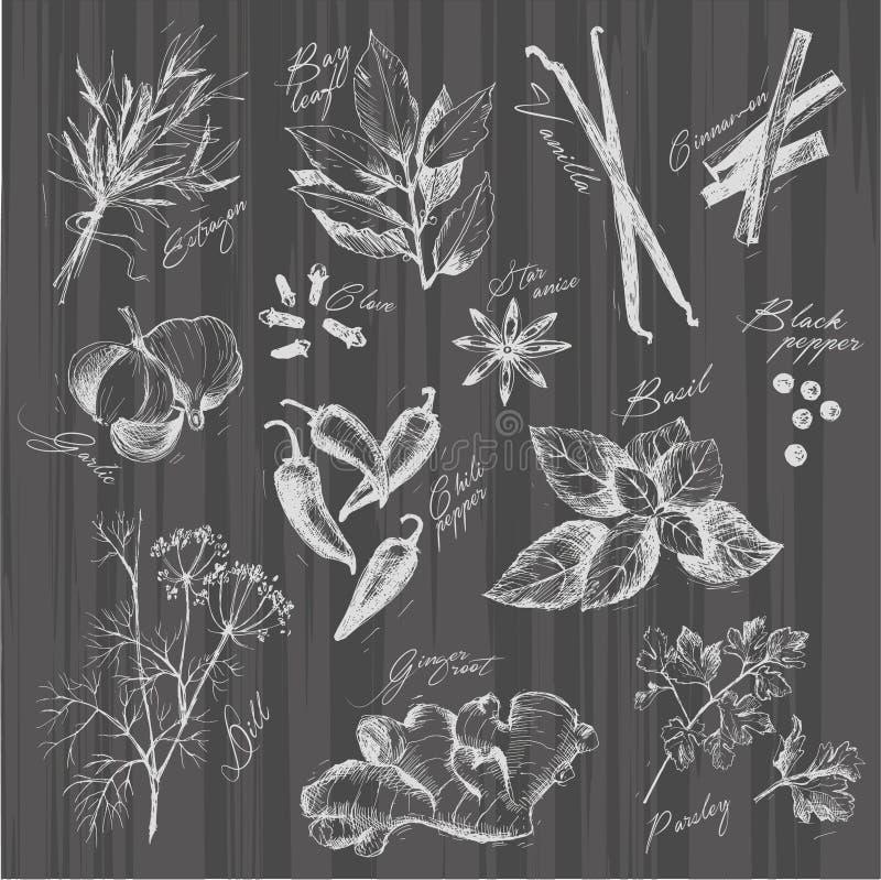 Vector собрание специй и травы чернил нарисованных рукой бесплатная иллюстрация