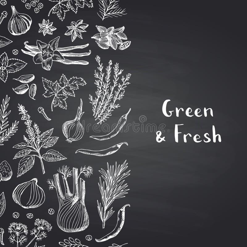 Vector травы и специи нарисованные рукой на черной предпосылке доски с местом для иллюстрации текста иллюстрация штока