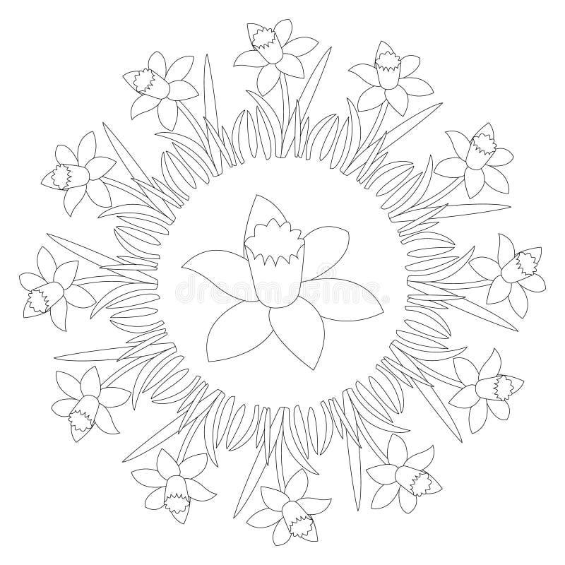Vector черно-белая круглая мандала весны с daffodil цветка - взрослой страницей книжка-раскраски иллюстрация вектора