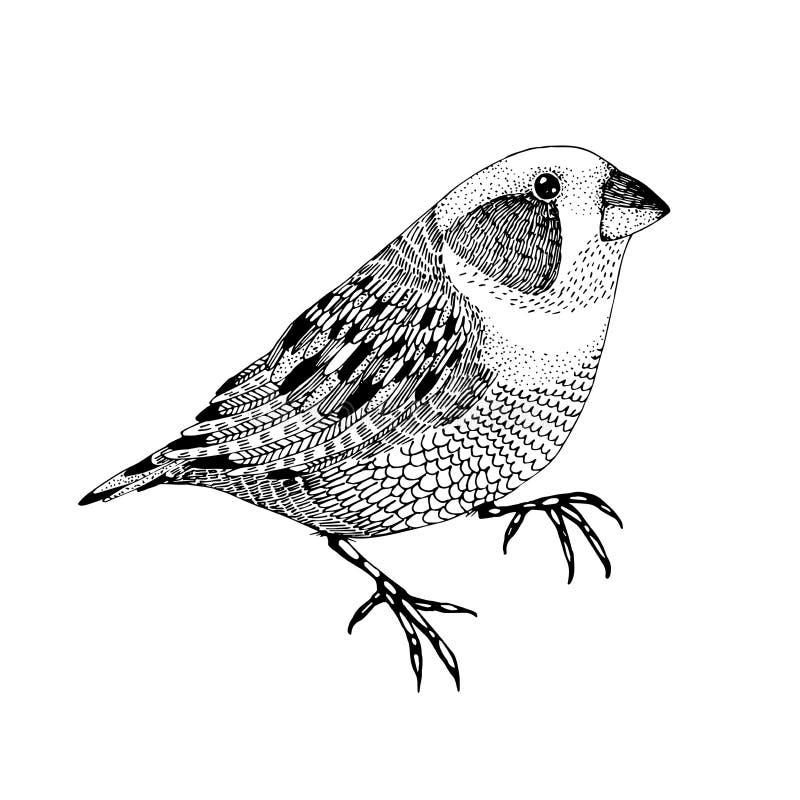 Vector abstract hand drawn small bird stock illustration