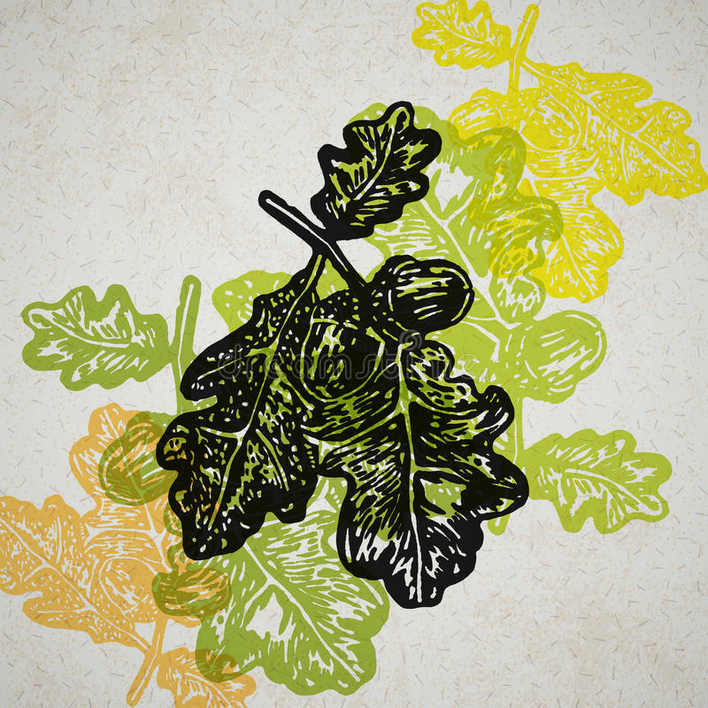 Vector acorns and oak branch in abstract composition. royalty free illustration