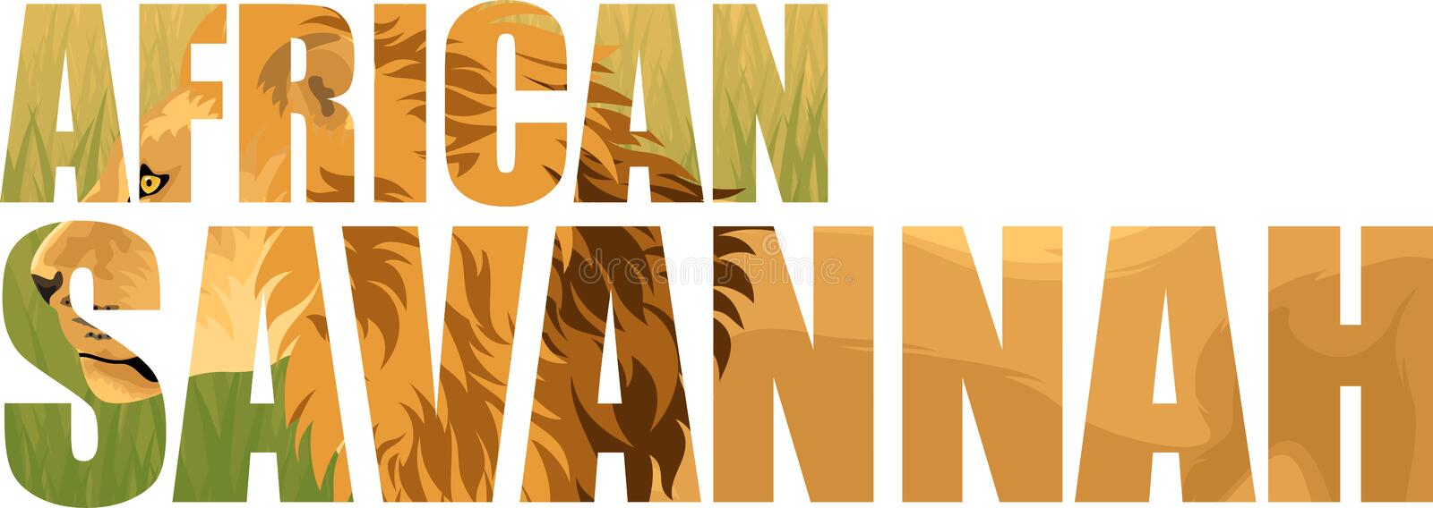 Vector african lion in savannah illustration. S isolated royalty free illustration