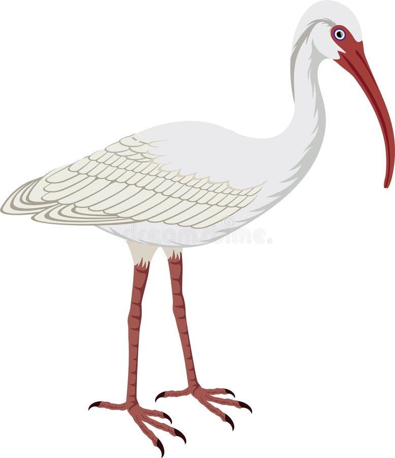 Free Vector American White Ibis Royalty Free Stock Photos - 82341488