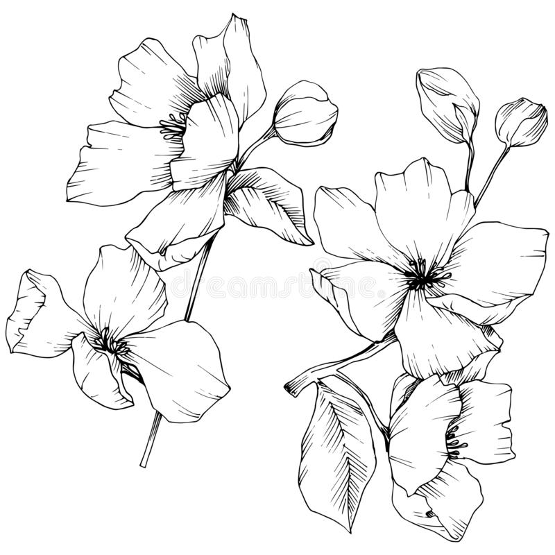 Vector. Appe blossom flowers. Wild spring leaf. Isolated apple b. Vector. Appe blossom flowers. Black and white engraved ink art. Wild spring leaf. Isolated stock illustration