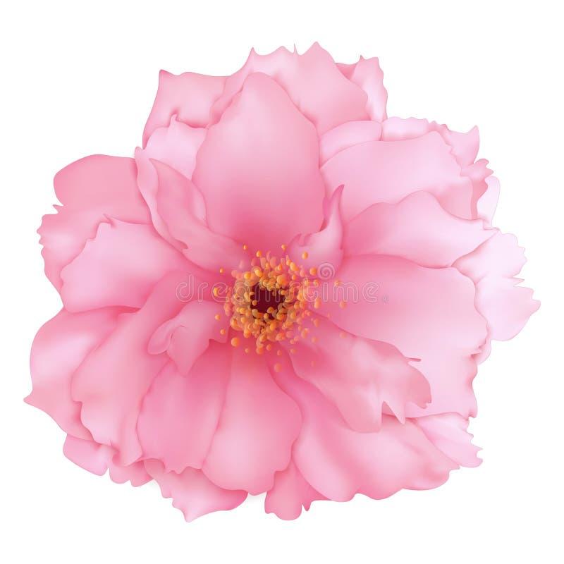 Vector a arte digital da flor cor-de-rosa realística de sakura da cereja 3D ilustração stock