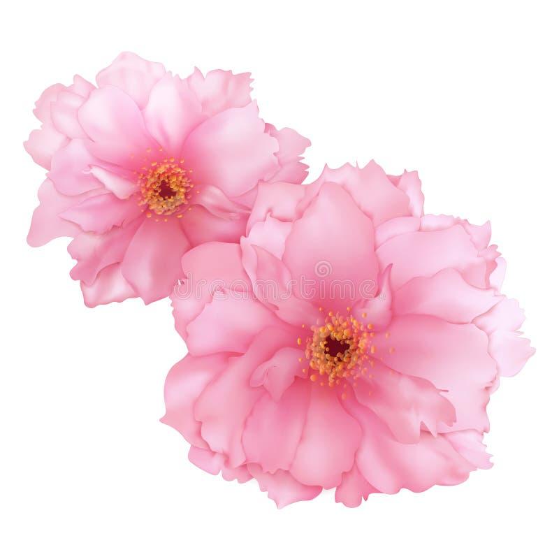 Vector a arte digital da flor cor-de-rosa realística de sakura da cereja 3D isolada ilustração do vetor