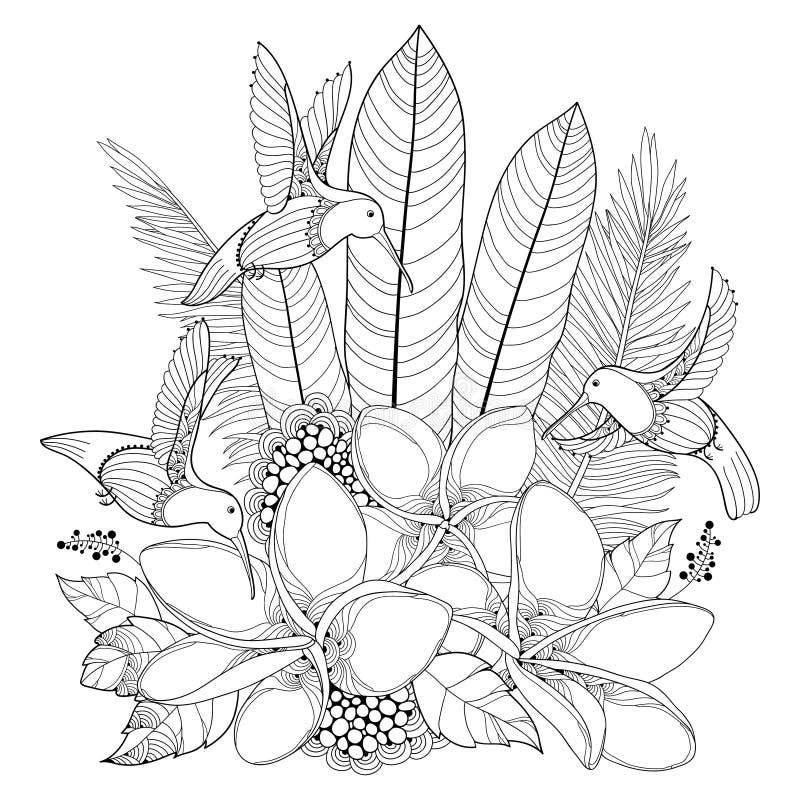 Vector as flores do colibri ou do Colibri, do Plumeria do voo e a folha de palmeira no estilo do contorno isoladas no fundo branc ilustração stock