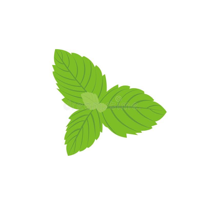 Vector as folhas de hortelã fresca em um fundo branco ilustração royalty free