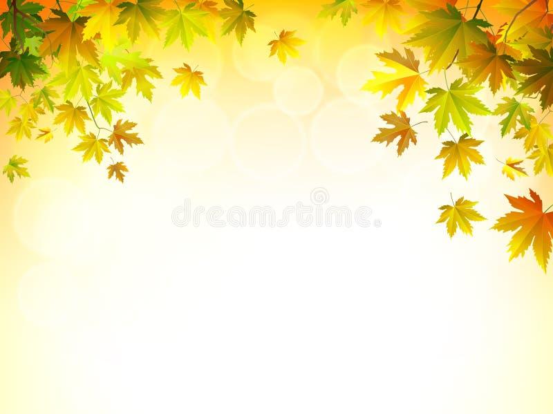 Vector as folhas de outono em um fundo ensolarado brilhante ilustração do vetor