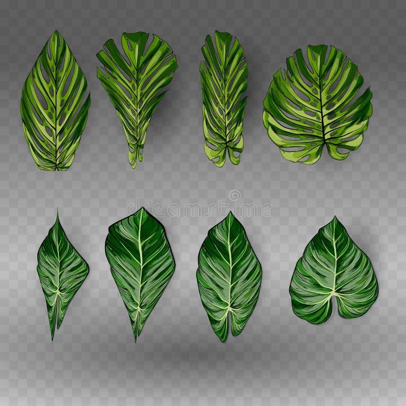 Vector as folhas tropicais exóticas, grupo da folha da selva isolado no fundo branco Estilo colorido liso ilustração stock