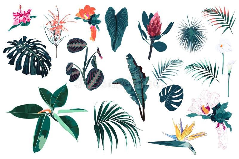 Vector as plantas, as folhas tropicais da selva e as flores azuis brilhantes ajustadas ilustração stock