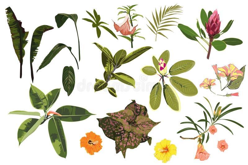 Vector as plantas, as folhas tropicais da selva e as flores verde-clara ajustadas ilustração royalty free