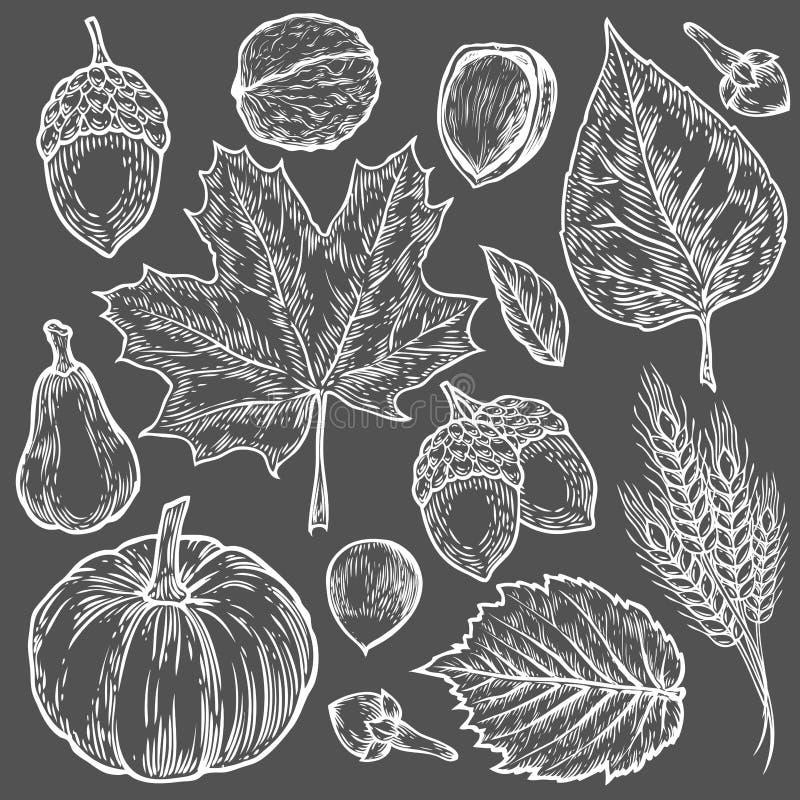 Vector autumn hand drawn set of leaf, nut, pumpkin, wheat, cloves, hazelnut, walnut, acorn. Vector engraved objects. Detailed royalty free illustration