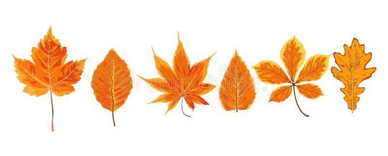 Vector autumn watercolor style seasonal Fall maple ash chestnut stock illustration