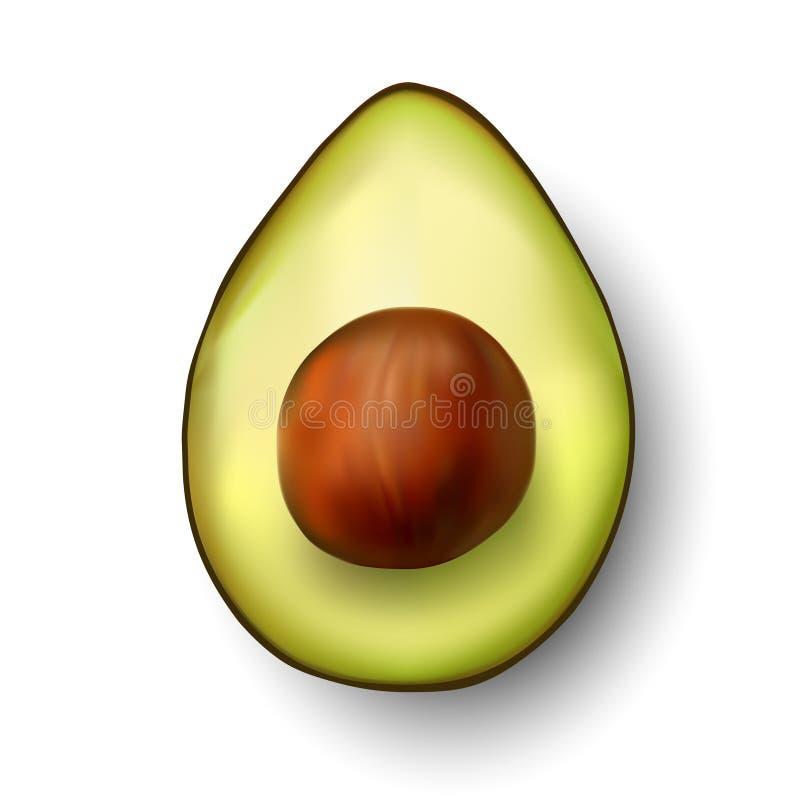 Download Vector Avocado Illustration Stock Vector - Image: 12411516