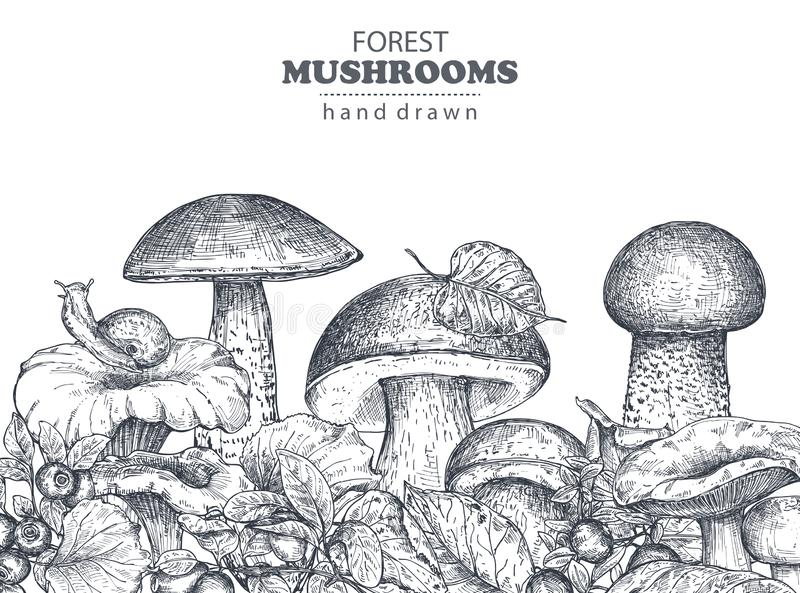 Vector background with hand drawn forest mushrooms stock illustration