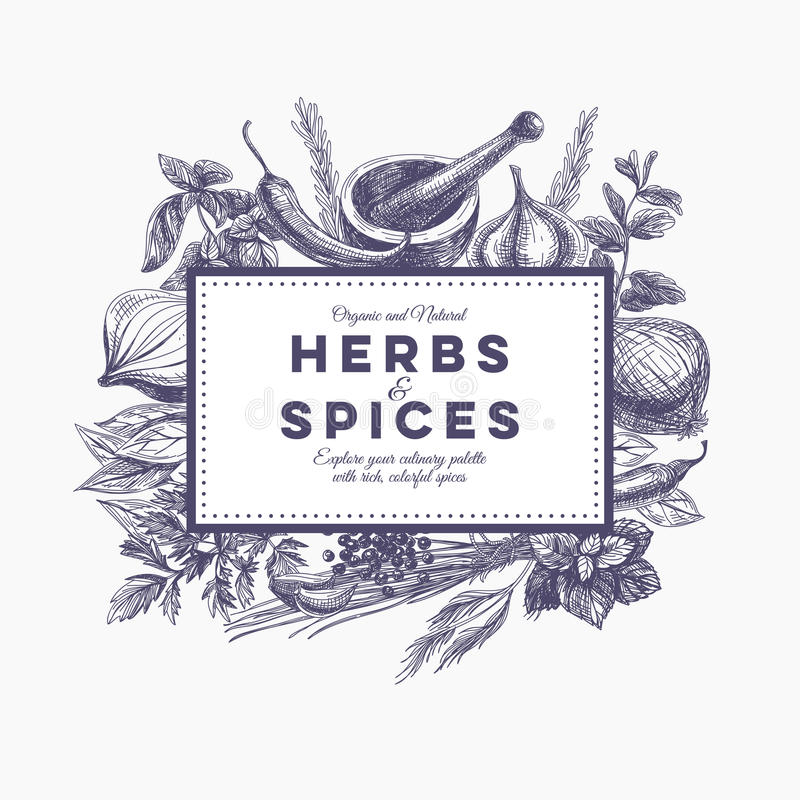 Vector background with hand drawn herbs and spices vector illustration