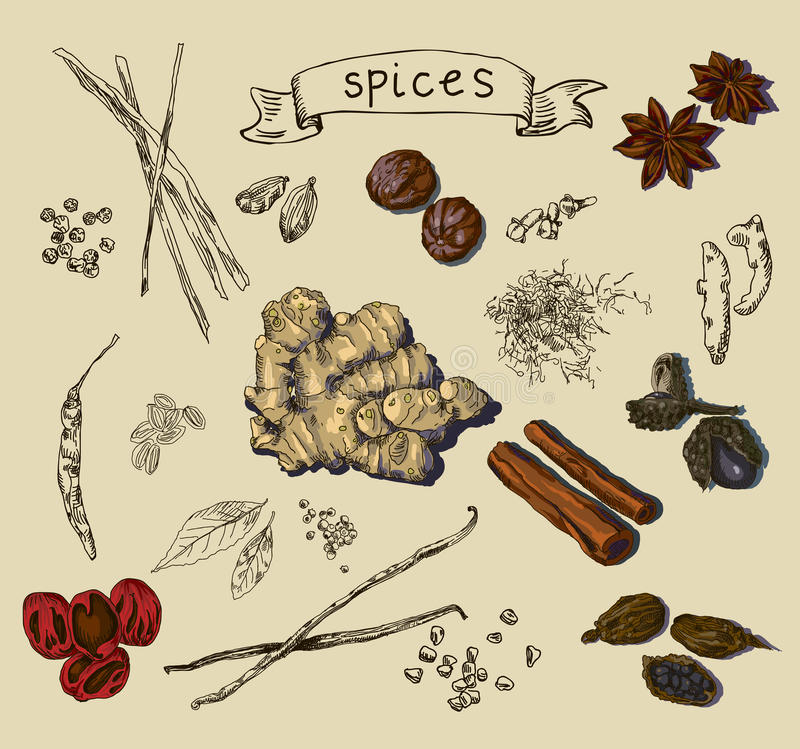Vector background with hand drawn spices stock illustration