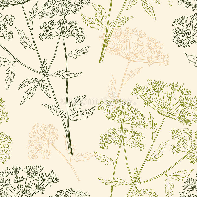 Pattern of the umbellate plants vector illustration