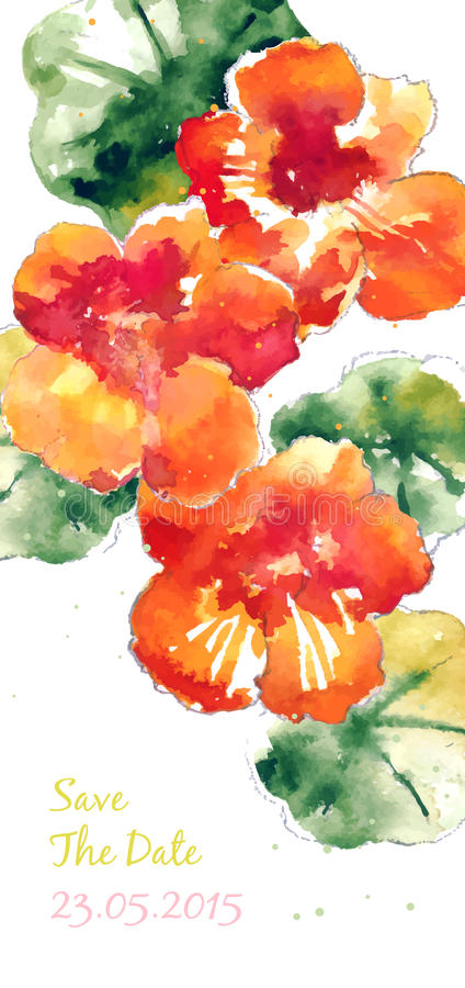 Vector background with orange watercolor nasturtium royalty free illustration