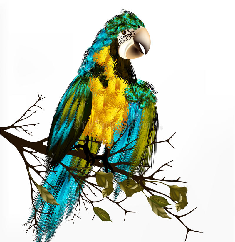 Download Colorful  Vector Realistic Tropical Bird Sit A Branch On White Stock Photos - Image: 29924123